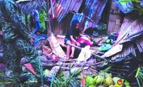菲律宾宿雾椰子树倒塌,导致一名妇女死亡,丈夫和女儿...