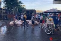 菲律宾那莫沓斯市运猪车侧翻40多头猪只遭民众疯抢